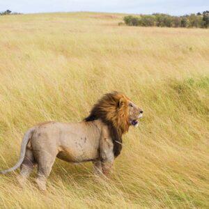 Foto 7 Afrika