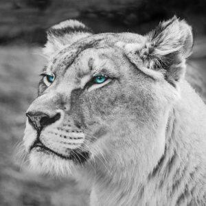 Foto 15 Leeuw