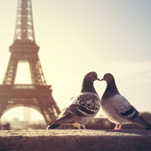 Foto 22 Parijs