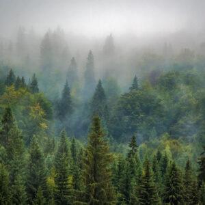 mistig-groen-bos-behang