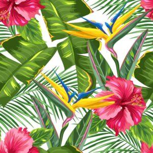 Foto 24 Palmbomen