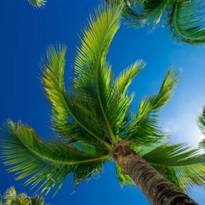 Foto 28 Palmbomen