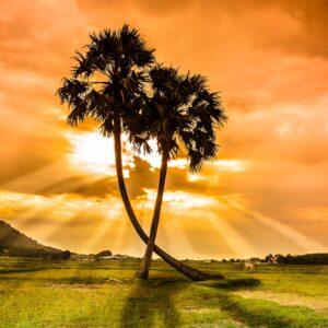 Foto 27 Palmbomen