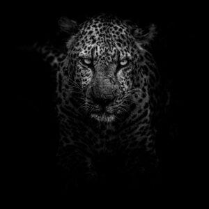 Foto 10 Zwart Wit