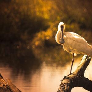 Foto 23 Vogels