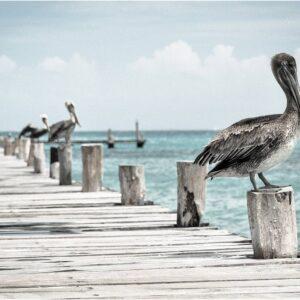 Foto 22 Vogels