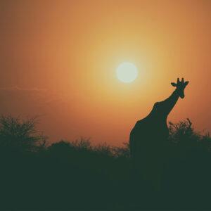 Foto 11 Afrika