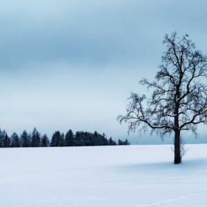 Foto 11 Oostenrijk