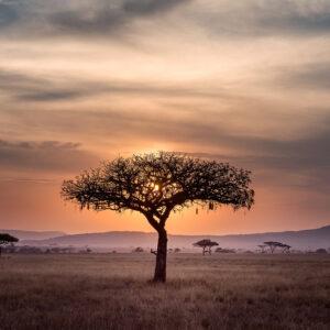 Foto 12 Afrika