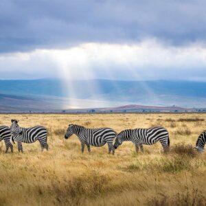 Foto 14 Afrika