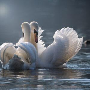 Foto 20 Vogels