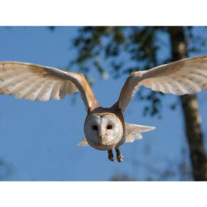 Foto 24 Vogels
