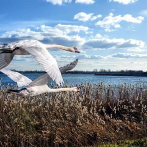 Foto 19 Vogels