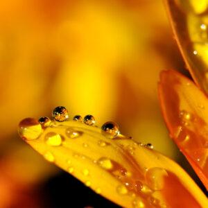waterdruppels-geel-oranje-behang