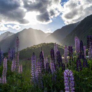 Foto 19 Nieuw-Zeeland