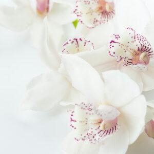 Foto 11 Orchidee
