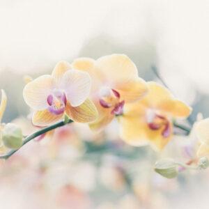 Foto 8 Orchidee