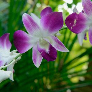 Foto 6 Orchidee