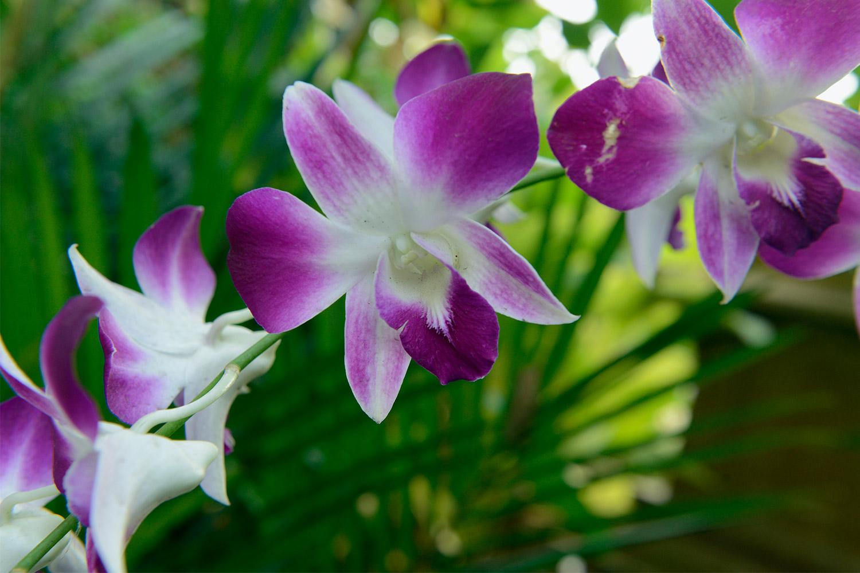 paarse-orchidee-groene-palmen