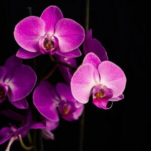 Foto 5 Orchidee