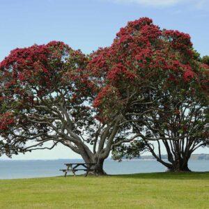 Foto 8 Nieuw-Zeeland