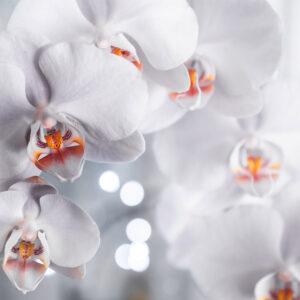 Foto 3 Orchidee